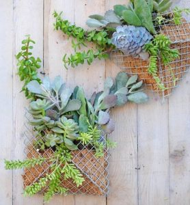 try-it this weekend:<br> DIY SUCCULENT WALL PLANTER