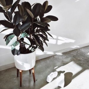 home inspiration:<br> THE NEXT NEW &#8216;IT&#8217; HOUSEPLANT