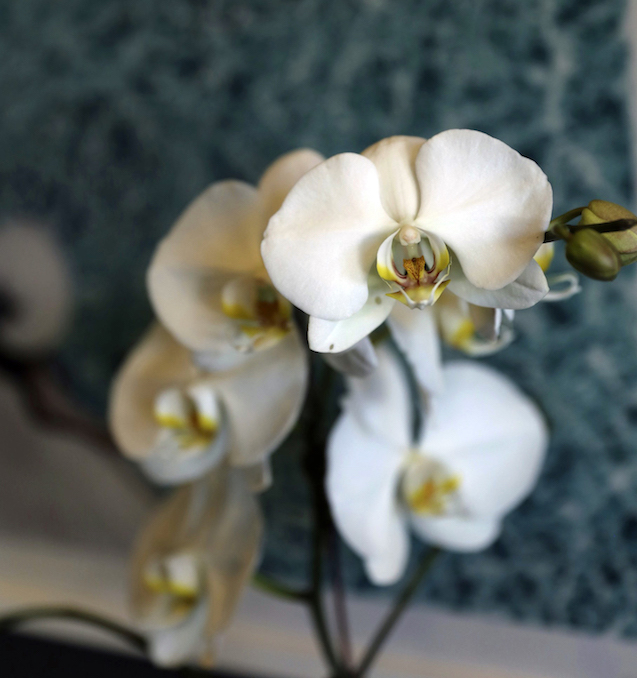 I'M A HUGE FAN OF ORCHIDS, FOR MYSELF AND TO GIVE AS GIFTS…