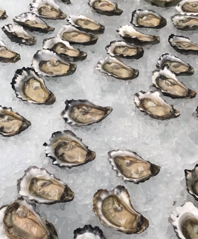 DIARY OYSTERS